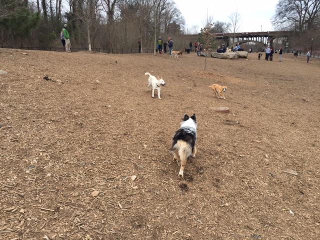 Piedmont Dog Park Drone Video