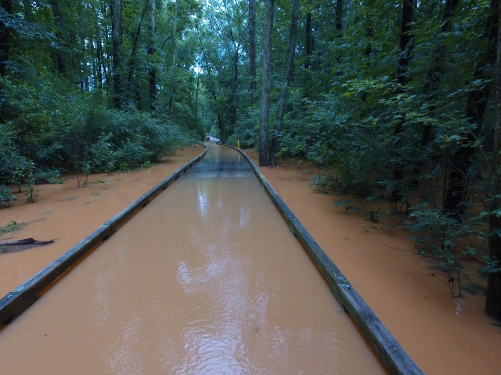 Big Creek Greenway Flood Drone Video
